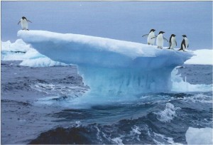 Front of Postcard from Antarctica